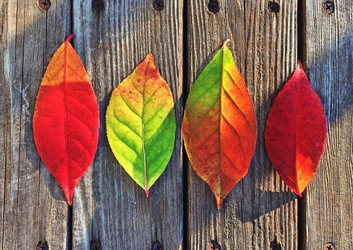 leaves-1051937_1920